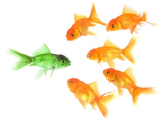 iStock_goldfish